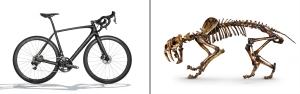 bike_sabertooth_blog